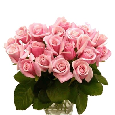 Bunch of 24 Baby Pink Roses