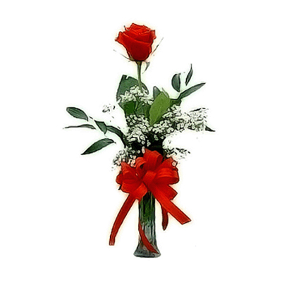 a single red rose in a vase